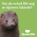 Stöd djurens rätt - Bli djurfadder i Djurens Rätt!