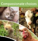 """Framsidan på en folder. En höna, kalv, katt och kanin tittar in i kameran under texten """"Compassionate choices"""""""