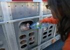 Djurrättsaktivist gav törstig gris vatten - riskerar nu fängelse