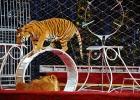 Malta förbjuder djur på cirkus