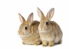 EU-domstolen rekommenderas att täppa till kryphål för djurförsök av kosmetika