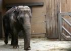 Mexiko förbjuder djur på cirkus