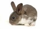 Schweiz det senaste landet som förbjuder djurtestad kosmetika