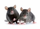 Nya Zeeland tar ställning mot djurtestad kosmetika