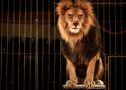Mexico City förbjuder djur på cirkus