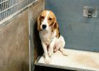Hunden på bilden är inte desamma som nämns i djurförsöket nedan. Foto: BUAV