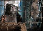 Skriv på för pälsdjuren i Finland