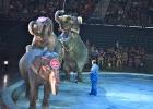 Hawaii vill sätta stopp för föreställningar med vilda djur