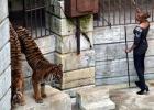 Om djuren i Fångarna på fortet