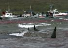 Valar dödade utanför Färöarna