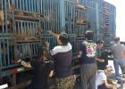 Aktivister i Kina höjer rösten för hundarna