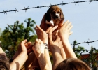 3 000 beaglehundar slipper djurförsök