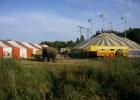 Cirkustält och elefanter