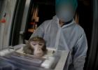 Apor plågas i djurförsök på tyskt laboratorium