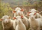 Ny lag i Luxemburg gör djur till kännande varelser