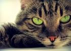 Böter för att lämna katt ensam