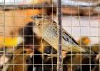 Medborgarförslag för att fåglar ska få flyga fritt i Lund
