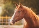 Nu kan vi tala med hästar