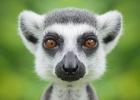 Buenos Aires djurpark stänger efter 140 år