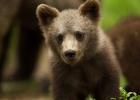 Djurungar dödas på svenska djurparker