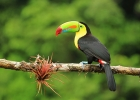 Ny djurskyddslag i Costa Rica