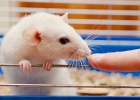 Australien förbjuder djurtestad kosmetika