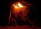 Valencia stoppar traditionen med eldtjurar