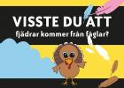 """Bild på kalkon med text """"Visste du att fjädrar kommer från fåglar"""""""