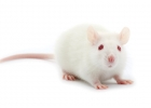 Merz-Pharma, stop testing Botox on animals