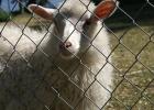 Ralph Lauren - dags att plocka bort ullen