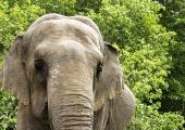 Cirkusar med elefanter inte längre välkomna till Oslo