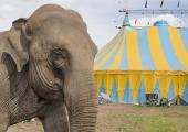 Dublin förbjuder vilda djur på cirkus