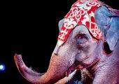 Skrivelse angående förbud mot vilda djur på cirkus