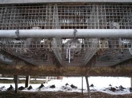Djur i pälsindustrin