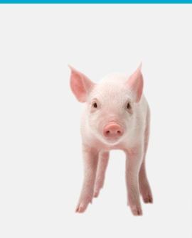 En liten griskulting kikar på dig
