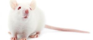 Ipsen, stop testing Botox on animals