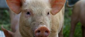 Vi vill att FN antar en resolution om djurs rättigheter!