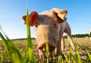 Djur i livsmedelsindustrin