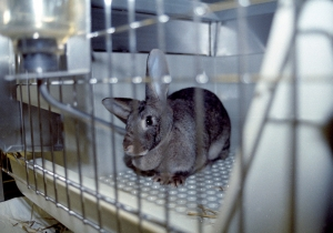 Djurförsök
