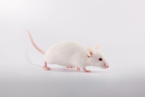 Stop testing botox on animals