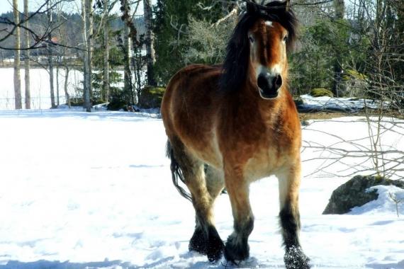Hur mår våra hästar?