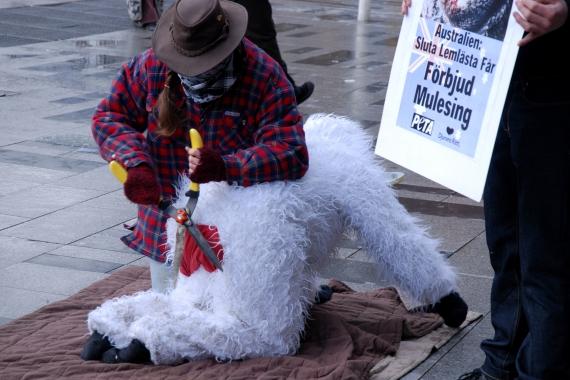 Djurens Rätt och PETA demonstrerar mot mulesing i mars 2008. Foto: Ulrika Tamm