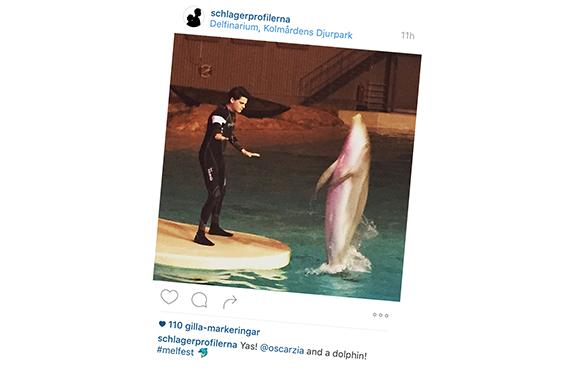 Melodifestivalen: Delfiner i fångenskap är inte underhållning