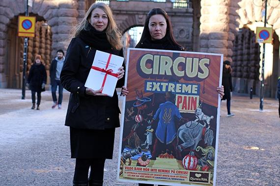 Regeringen uppmanas förbjuda vilda djur på cirkus