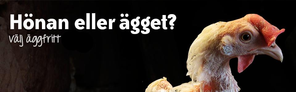 Djurens Rätts kampanj mot ägg från hönor i bur.