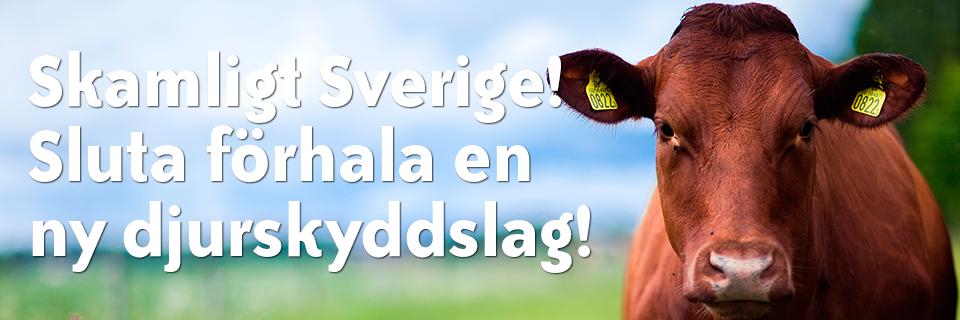 Skamligt Sverige! Sluta förhala en ny djurskyddslag!