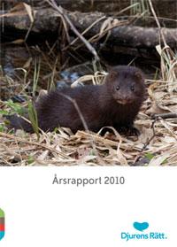 """En söt mink tittar in i kameran. Under finns texten """"Årsrapport 2010"""""""
