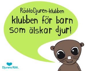 Rädda Djuren klubben - klubben för barn som älskar djur!