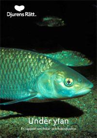 En fisk på havsbottnen möter din blick. Under finns texten: Under ytan en rapport om fiskar och fiskindustrin