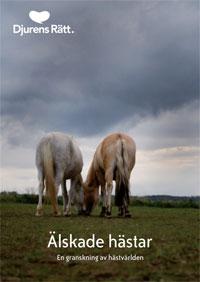 """Två hästar står och betar på en lerig gräsbädd. Under står texten """"Älskade hästar: En granskning av hästvärlden"""""""